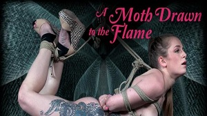Cora Moth – A Moth Drawn To The Flame